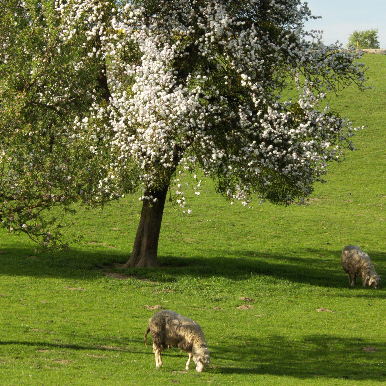 bilder_landgasthof_landwirtschaft_neu_3